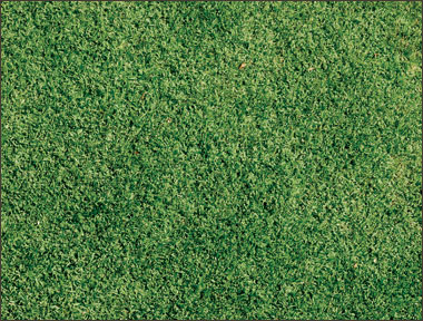A section of green lawn.