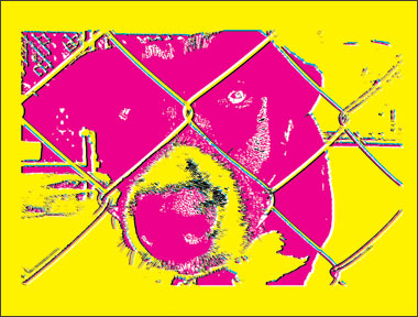 Manipulated and colourful image of a dog.